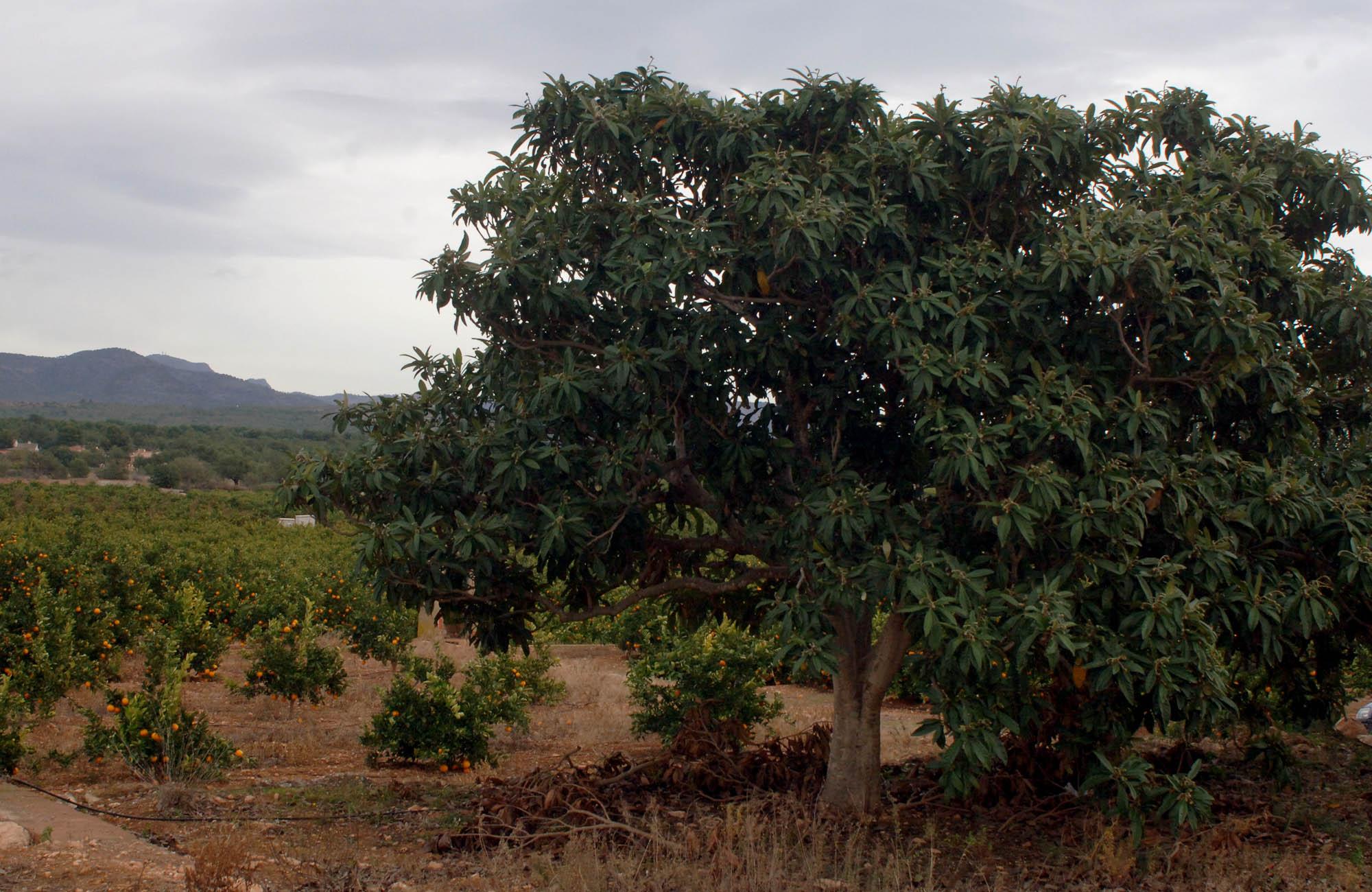 Agricultura destina 730.000 euros a 27 proyectos de innovación tecnológica en fincas o explotaciones colaboradoras