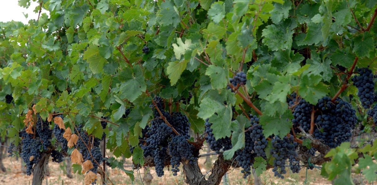 """Agricultura concedeix ajudes per més de 3 milions d""""euros per a la promoció dels vins valencians a l""""estranger"""