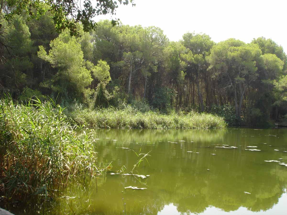 """La Comissió d""""Avaluació Ambiental dona llum verda al nou Pla d""""ordenació de recursos naturals del Túria"""