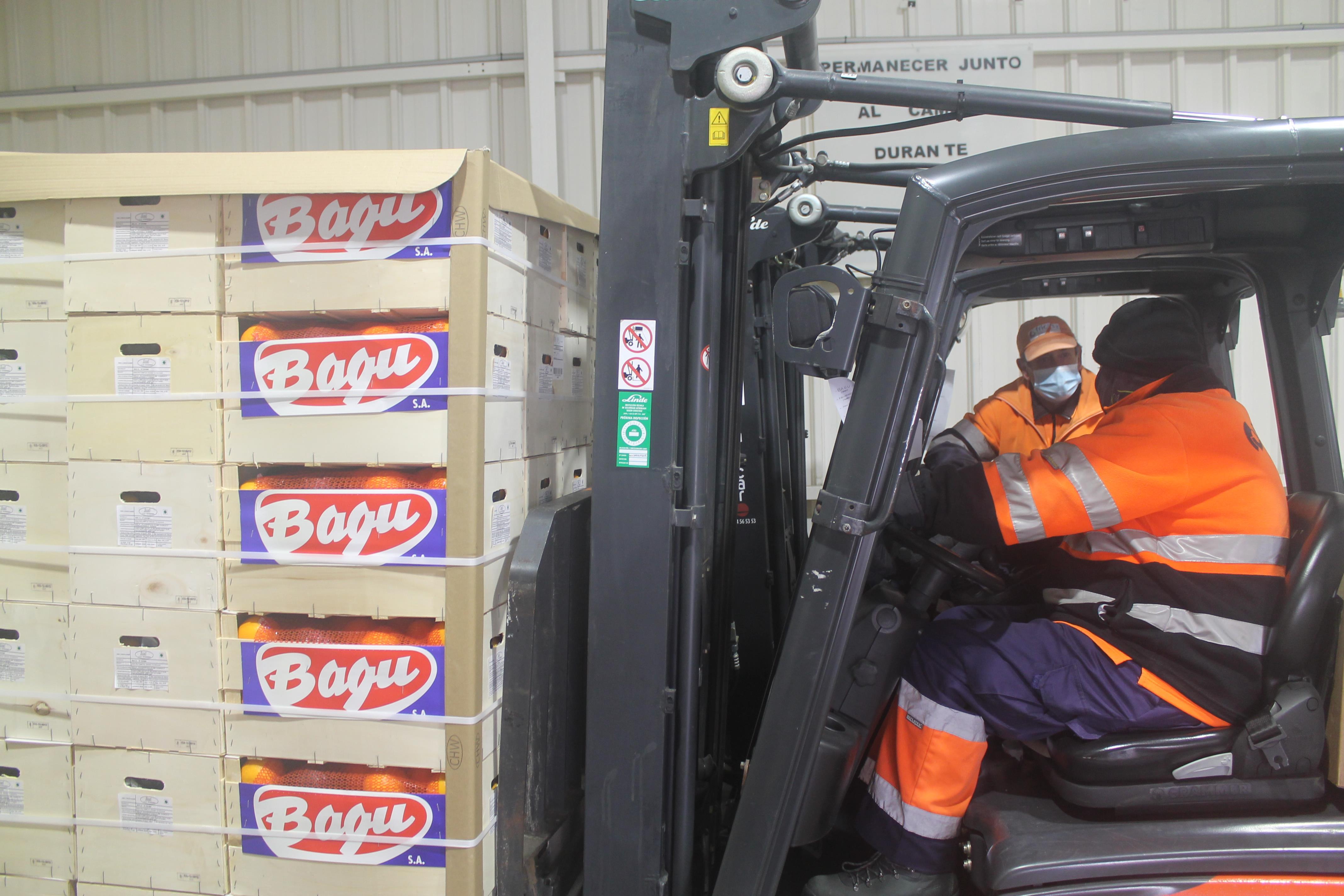 """La Conselleria de Agricultura califica de """"éxito"""" el envío piloto de naranjas con tratamiento de frío en tránsito a India"""