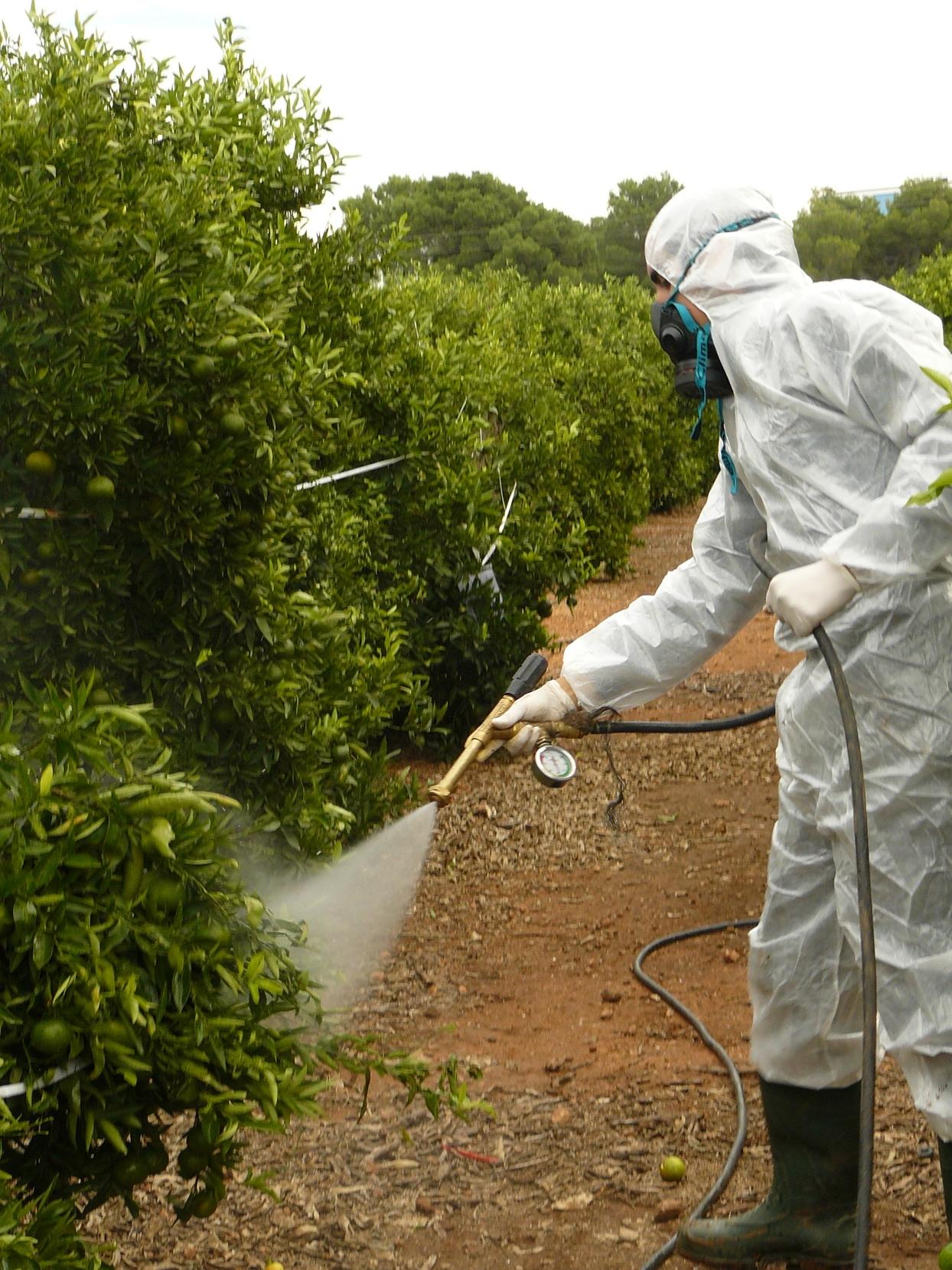 """Agricultura prueba un tratamiento clásico contra el """"cotonet"""" que demuestra una alta eficacia"""